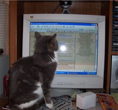 thunder cat newman