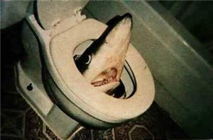 toilet shark attack